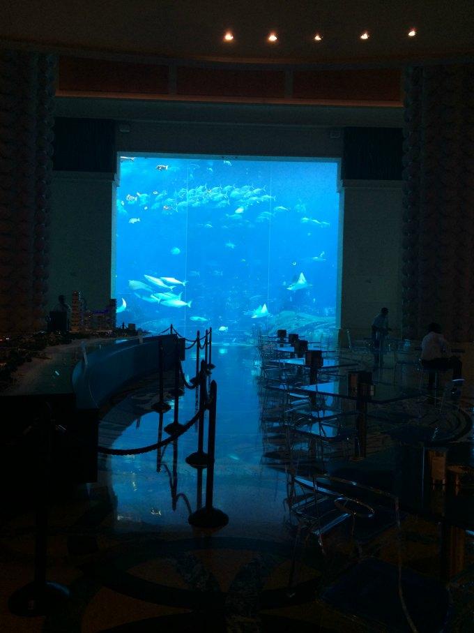 atlantis the palm aquarium