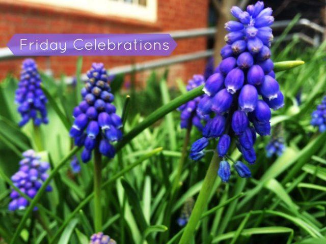 Friday Celebrations 3