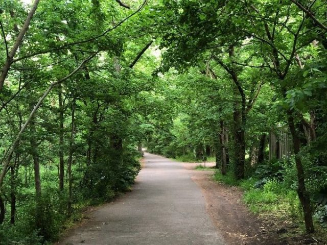 walking path with green trees